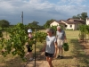 Family help with BdB harvest